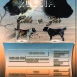 Продам щенков среднеазиатской овчарки., Новосибирск
