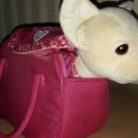 Продам собачку чичилав, Новосибирск