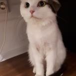 Найден кот!!!, Новосибирск