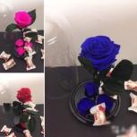Необыкновенная роза в колбе, Новосибирск