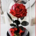 Живая роза в колбе стоит от 3 до 5 л. высота 28 см, Новосибирск
