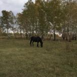 Продам лошадей, Новосибирск