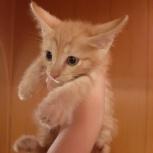 Отдадим котят, Новосибирск