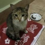 Найдена молоденькая кошечка, Новосибирск
