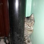 Внимание найдена кошка на обьгэс. Ищу старого или нового хозяина, Новосибирск