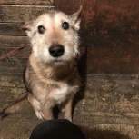 Найден пес на Шлюзе, Новосибирск