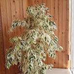 Излишки комнатных растений, Новосибирск