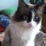 Потерялся кот в Октябрьском районе (Сад Мичуринцев), Новосибирск