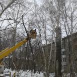 Спил / удаление, сруб деревьев, расчистка от поросли участков, Новосибирск