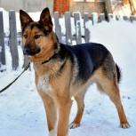 Очаровательная молоденькая собака Джина ищет родителей, Новосибирск