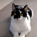 Дерзкая и красивая кошечка-подросток Кира !, Новосибирск