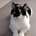 Дерзкая и красивая кошечка-подросток Кира!, Новосибирск