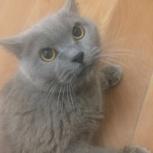 Отдам кошку, Новосибирск