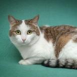Пуся - любопытная ласковая кошка!, Новосибирск