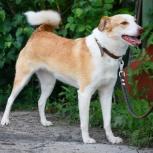 Изящная зеленоглазая собачка Тиффани, Новосибирск