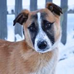 Джек милый щенок в добрые руки, Новосибирск