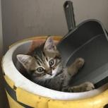 Кошечки и котики, Новосибирск