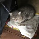Найден кот, Новосибирск