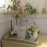 Комнатные растения, Новосибирск