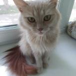 Молоденькая кошка с красивым рыжим хвостом, Новосибирск