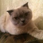 Потерялась кошка!!!, Новосибирск