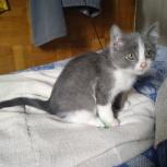 Найден котенок, Новосибирск