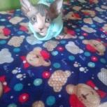 Бамбино девочка-кошка, Новосибирск
