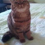 Пропала кошка,юго-западный жилмассив, Новосибирск