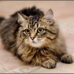 Котик - подросток Фунтик, Новосибирск