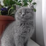 Предлагается к продаже кошечка, Новосибирск