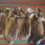 Продам шкуры ондатры ,  -выделанные, Новосибирск