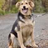 Собака Чара – идеальная кандидатка на роль всеобщей семейной любимицы!, Новосибирск