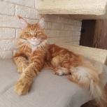 Лежанка настенная для кошек, Новосибирск