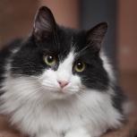 Любознательный котик Феликс!, Новосибирск