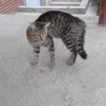 Котик в полосочку, Новосибирск