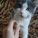 Найден котёнок (девочка), Новосибирск