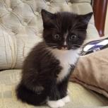 Чудесные котята ищут новый дом, Новосибирск