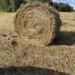 Продам сено, разнотравье, Новосибирск