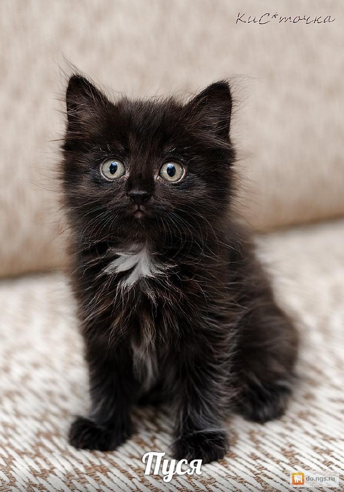 сухие фото черного пушистого котенка процесс локализуется области