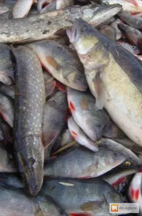 Всего в рубрике рыба горячего копчения представлено 4 товара от 3 компаний из нижегородской области и 27 товаров от 1 компании c доставкой в нижегородскую область с фотографиями, ценами и условиями поставки.