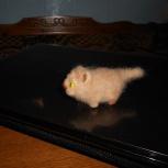 игрушка валяная кошка на ладошке, Новосибирск