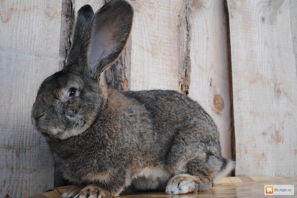 фаллос продажа кроликов в новосибирске на авито порно-видео самых желанных