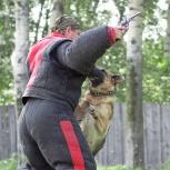 Кинолог Инструктор по дрессировки собак . Клуб СДКЦ, Новосибирск