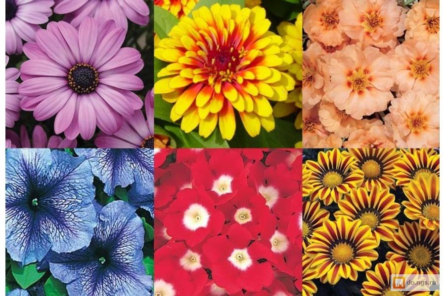 Аксессуары для цветов в новосибирске оптом доставка в регионы интересный подарок на 30 лет женщине