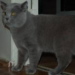 Ищу кошку, вязка, Новосибирск