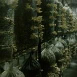 Мицелий вешенки, опят, шиитаки, Новосибирск