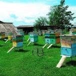 Пчелосемьи и продукты пчеловодства, Новосибирск