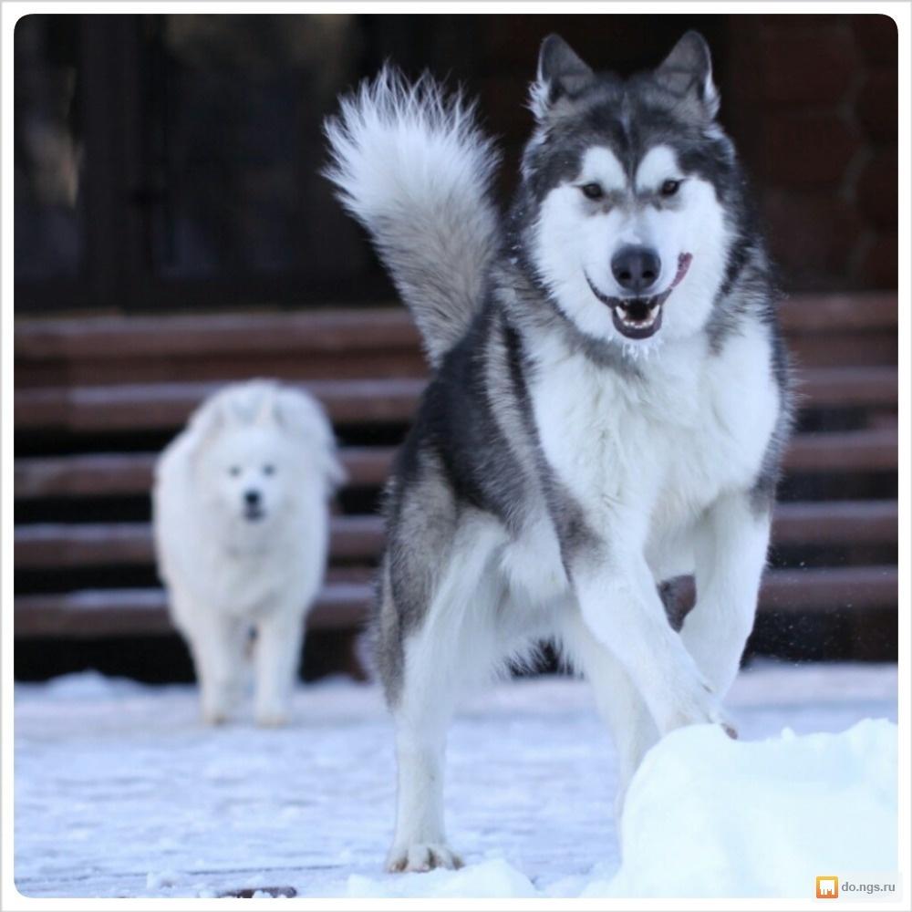 Знакомства волчата discussion мел знакомства
