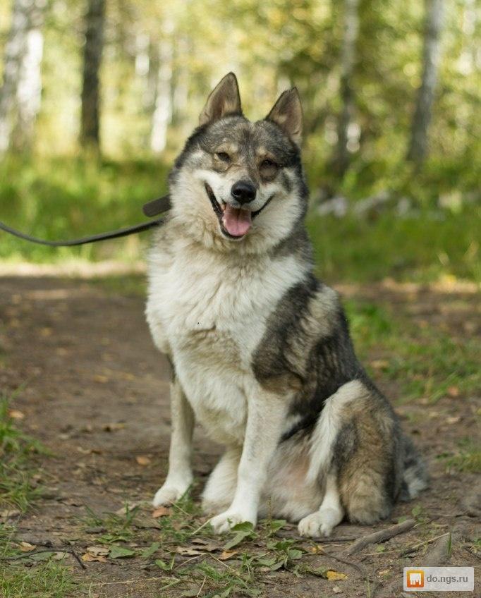 Полет и гибель собаки Лайки вопросы и ответы  Всё что