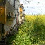 Куплю пчелоинвентарь б.у., Новосибирск